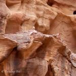 Sinai Rosefinch, Wadi Rum