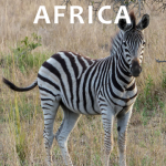 Books recommended for an African Safari