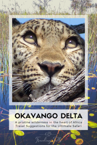 The Okavango Delta, the 1000th UNESCO site, is a must-see for African wildlife. How to get there, what to see, and why you'll love it!