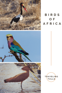 Birds of Africa. Photos of some of the spectacular birdlife seen on the African savanna. Birdwatcher on Safari