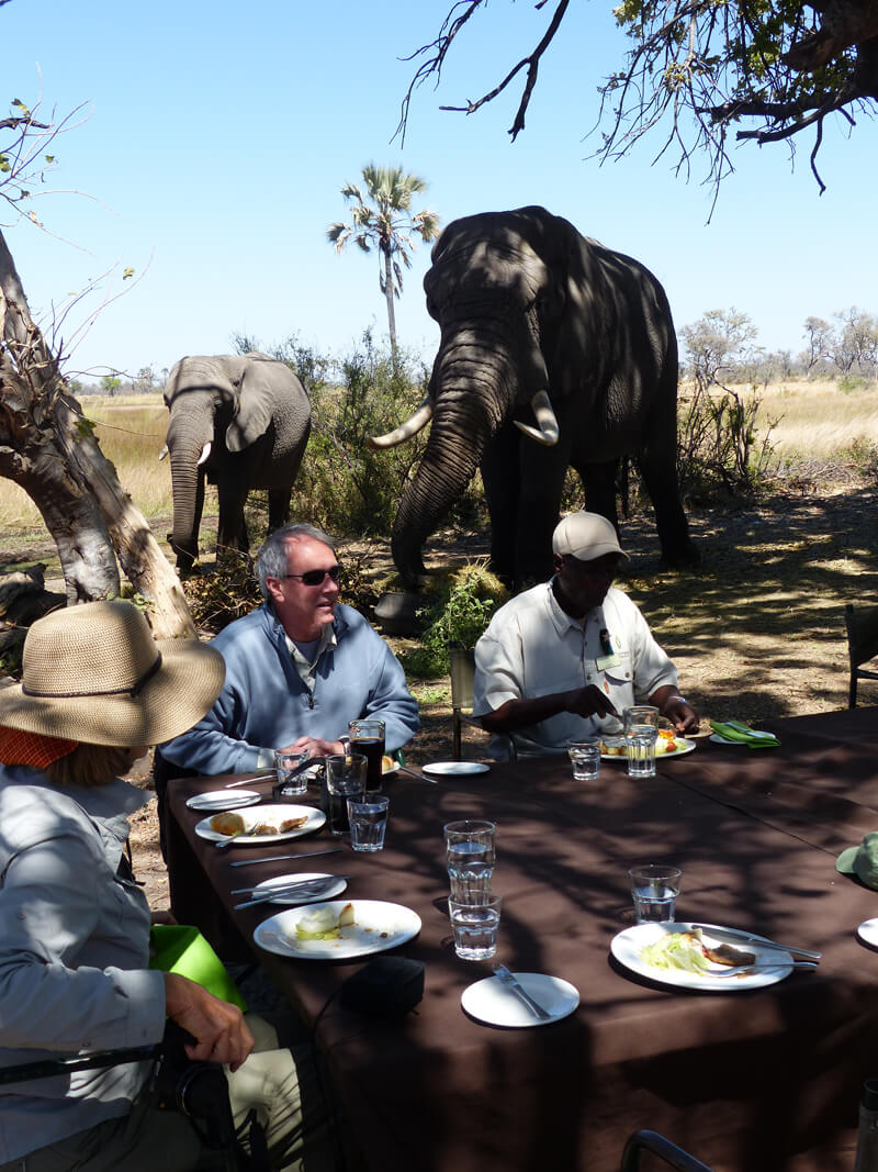 Living With Elephants Foundation visit on our African Safari adventure in Botswana