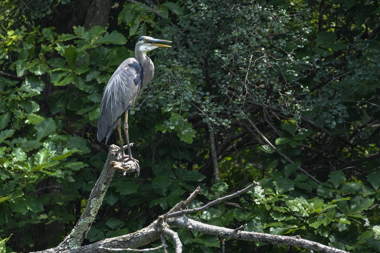 Heron and other birds can be seen along the bike path
