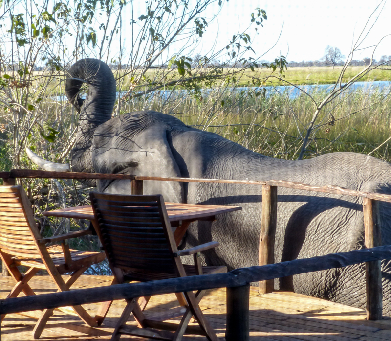 African Safari adventure, elephant in camp