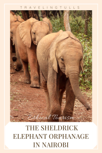 Support visit the Sheldrick Wildlife Trust elephant orphanage in Nairobi
