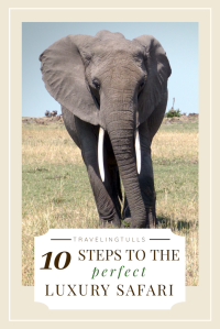 Plan the perfect luxury Safari in Africa. 10 steps to the trip of a Lifetime.