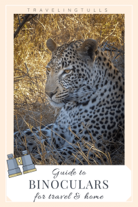 leopard in South Africa - Guide to binoculars for travel. Suggestions for all price ranges. #wildlifetravel