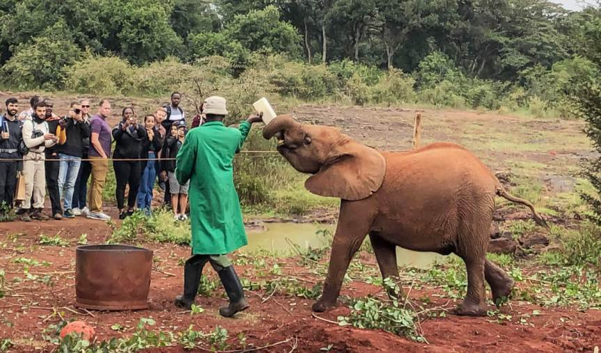 Ethical Tourism: Visiting the Sheldrick Elephant Orphanage in Nairobi