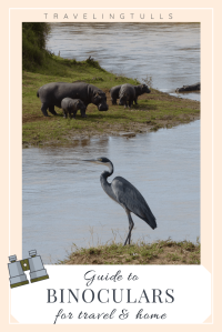 Heron with hippos - guide to the best binoculars for travel and home