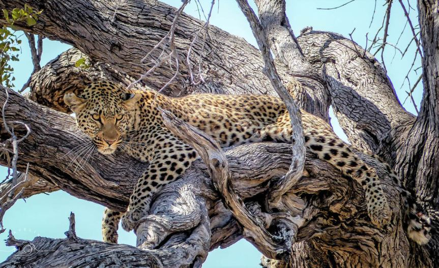 10 Steps to the Perfect Luxury Safari in Africa