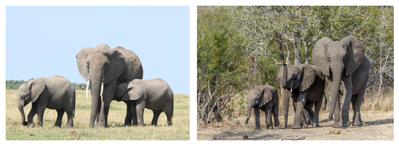 photography tips for safari in Africa