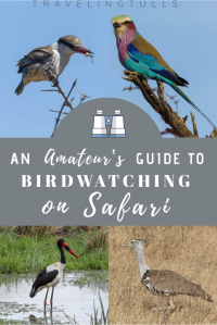 Birds of Africa. How to birdwatch on a photo safari in Africa. #birdsofafrica #birdsofsouthafrica #birdsofeastafrica