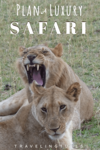 how to plan the perfect safari in Africa. a luxury safari is the ultimate bucket list trip.