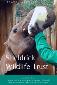 Sheldrick Wildlife Trust in Nairobi rescues orphaned elephants and transitions them back to the wild.