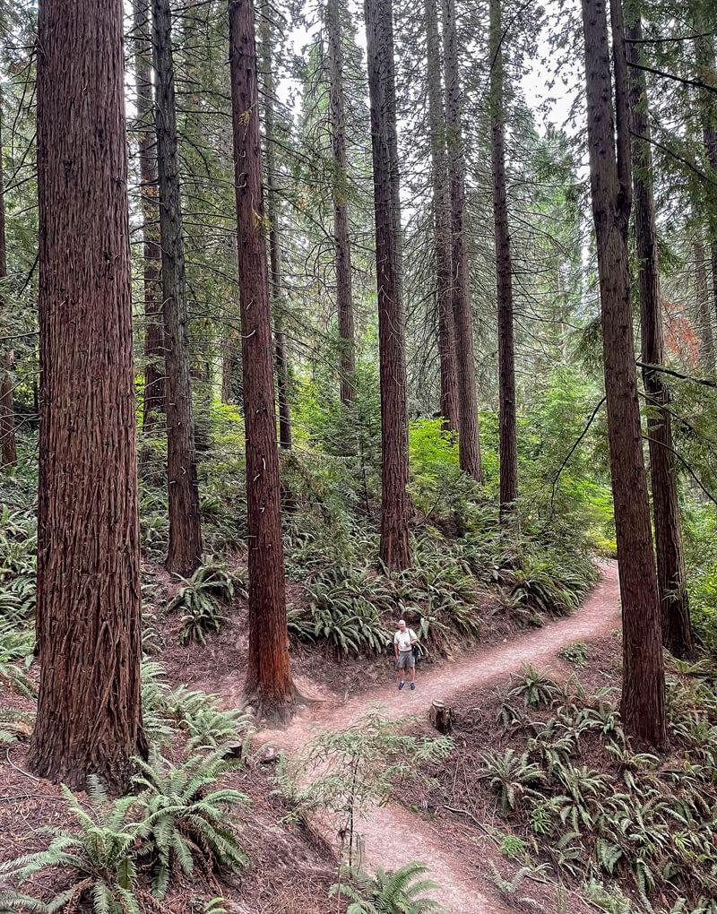 Redwood Trail in Hoyt Arboretum, part of Portland, OR Washington Park.