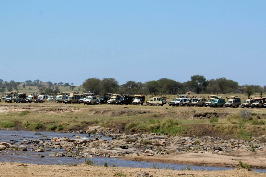 crowds on the river bank during the Mara crossing