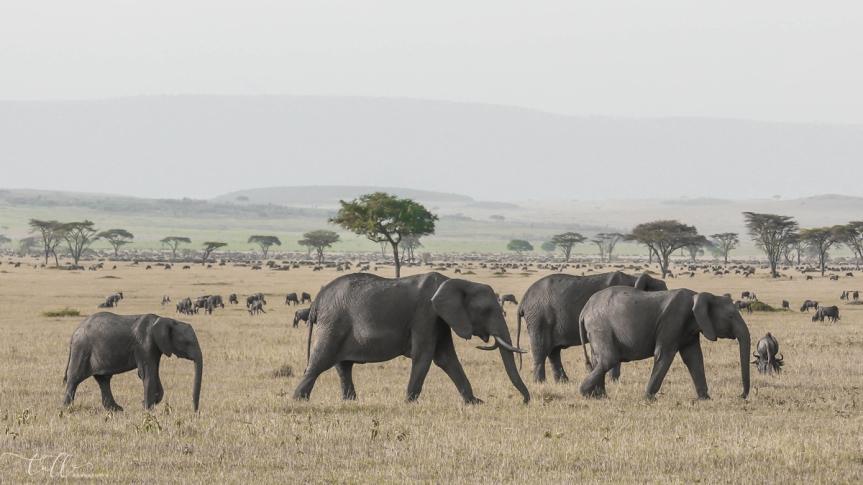 Focus East African Safari: photos to inspire from Kenya andTanzania
